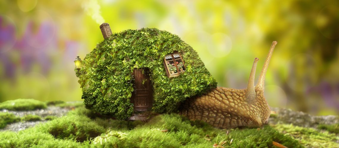 Illustration of a snail with a cosy house for a shell