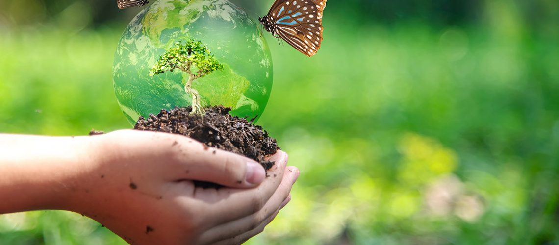 person holding mound of earth with a miniature tree and butterflies